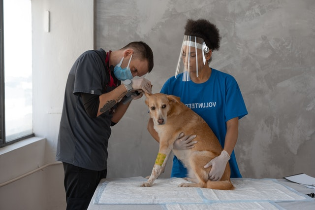 two persons with dog